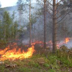 PRESSEMELDING: «Totalforbud mot bruk av åpen ild i eller i nærheten av skog og mark»